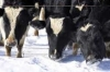 Winter Dairy Management - Canandaigua Location