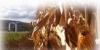 Southern Tier Crop Congress
