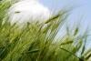 2020 Steuben County Crop Symposium