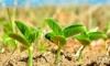 Soybean & Small Grains Congress