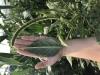 CORE Pesticide Training