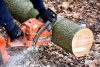 Proper Chainsaw Sharpening Techniques