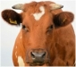 7th Annual I-29 Moo University Dairy Beef Short Course