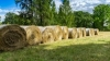 Advanced Hay and Pasture School