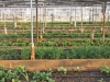 Navigating Grants for Urban Agriculture in New York State Webinar