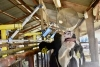 Managing and Abating Heat Stress on your Dairy in 2021