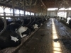 Cow Comfort Conference