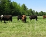 NYS Livestock Summit - Montour Falls Location