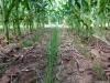 Soil Health Workshop with Cover Crop Interseeder & Herbicide Demonstration