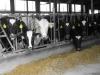 Feeder School - 2 day on-farm training, Day 2