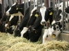 SCNY Dairy Manager Discussion Group Tour to WNY
