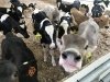 2018 Cow Comfort Conference,