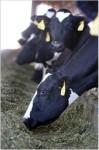 *** CLASS FULL *** Herd Manager Training - 2 Day Program, Day 1