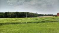 Malting Barley, Wheat & Rye Twilight Tour