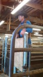 Stockmanship Training for Beef Producers