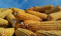 Corn Congress - Batavia Location