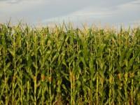 Corn Congress - Waterloo Location