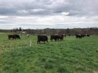 Pasture Walk - Youngman Farms - Wolcott, NY - RSVP by July 31st