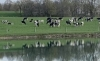 Dairy Grazing Pasture Walk Series: Troyer Farm