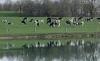 Dairy Grazing Pasture Walk Series: Carey Farm