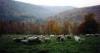 Integrated Parasite Management for Goats & Sheep Workshop