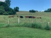 Laying Out a Grazing System: A Program for Veterans
