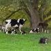 Pasture Walk with NOFA-NY