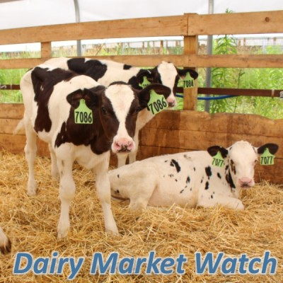 Dairy Market Watch - May 2020
