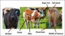 Characteristics of Determining Market Readiness of Finished Cattle