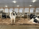 Back to Basics: Herd Management Lessons from COVID-19