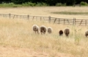 Preparing Livestock Producers for Drought Conditions - Farmer Resources