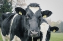 Microgrant for Dairy Farmers in New York