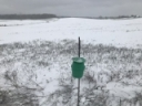 Checking Insect Traps in the Snow - What we have so far?