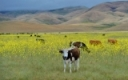 Spring Weed Control in Grass Hay and Pastures by Dwight Lingenfelter - PSU