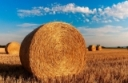 Short on hay this spring? by Joe Lawrence and Kitty O'Neil