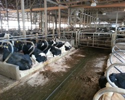 A Practical Retrofit to Improve Cow Comfort