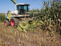 Using GDD to Predict Corn Silage Harvest