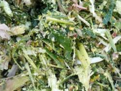 Shredlage Harvesting Recommendations