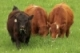 USDA Grass Fed Program For Small and Very Small (SVS) Producers