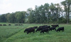Multispecies pastures show productivity, drought tolerant promise