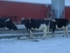The Dairy Culture Coach December 2016