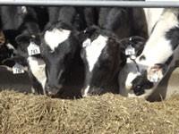 Calf & Heifer Congress 2016 -