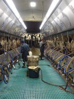 Workforce Issues and the New York Dairy Industry