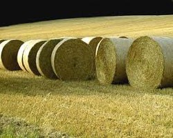 Hay Storage Considerations, Don't Waste it!