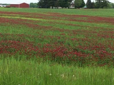 Reducing the Risk of Compaction When Grazing Cover Crops