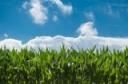 CORE Pesticide Training & NYSDEC Exam 2020