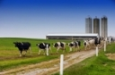 COVID-19 and Your Dairy Webinar