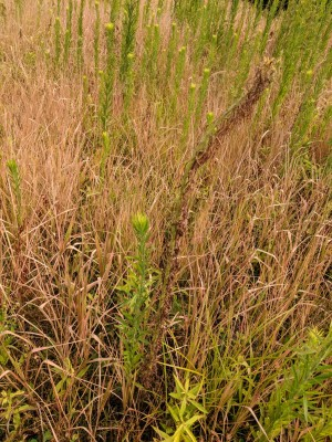 Statewide herbicide resistance screening to start in 2020: Help us help you!