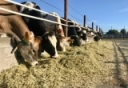 Dairy Responding to COVID-19 Podcast by PRO-DAIRY