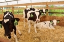 Financial Assistance for Farms Facing the COVID-19 Crisis